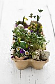 Easter arrangement of cress, quail eggs and flowers in egg box