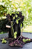 Elderberries and hops umbels in an old black enamel milk churn
