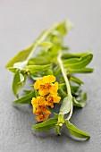 Flowering golden marigold
