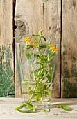 Gewürztagetes im Wasserglas