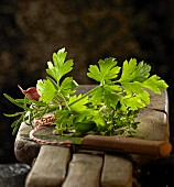 Flat leaf parsley, rosemary and other herbs on wooden board