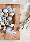 Quail's eggs in a wooden dish with feathers