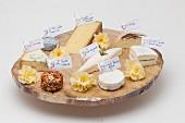 Verschiedene Käsesorten auf rustikaler Holzplatte