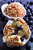 Blueberry muffins in muffin cases with fresh blueberries