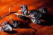Raisins on a vine