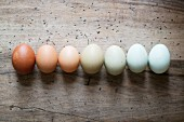 Various different coloured eggs in a rows on a wooden surface
