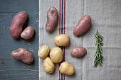 Various types of potatoes with rosemary on a tea towel (seen from above)