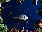 Meerbrasse inmitten von Gemüse auf blauem Tisch