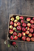 Red apples in a wooden crate (seen from above)