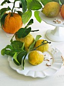 Various organic citrus fruits with leaves