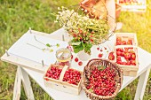 Camomile flowers, strawberries and redcurrants on a table outside