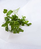 Fresh parsley on white parchment paper
