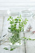 Fresh oregano in a jar on a wooden surface