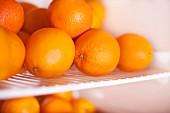 Viele Orangen auf Gitterrost eines Kühlschranks