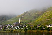 Wine-growing town of Bremm with vineyards in the mist, Rhineland Palatinate, Germany