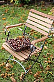 Wire basket of sweet chestnuts on garden chair
