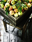 Freshly harvested apples in a wooden crate