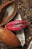 A nutmeg flower