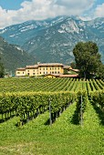 A panoramic view of the vineyard Tenuta San Leonardo, Borghetto, Italy