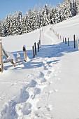 Verschneiter Weg mit Fußspuren zum Waldrand