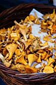 Fresh chanterelle mushrooms in a basket