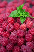 Raspberries and raspberry leaves