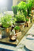 Various herbs in metal pots on a laid table
