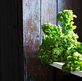 Kale against a rustic wooden wall