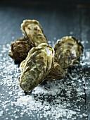 Oysters on salt