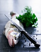 Raw fish, a bunch of herbs and peppercorns