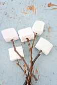 Marshmallows on twigs
