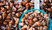 Fresh snails at a market (Sokcho, Gangwon, South Korea)