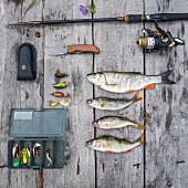 An arrangement of freshly caught fish and angling equipment