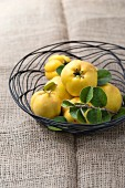 Quinces with leaves on a wire basket