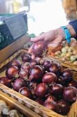 Rote Bio-Zwiebeln im Geschäft