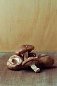 Shiitake mushrooms on a brown surface