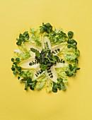 Verschiedene Blattsalate dekorativ arrangiert auf gelben Untergrund
