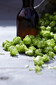 Hops umbels and a bottle of beer