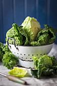 Fresh savoy cabbage in a colander