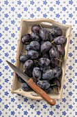 Fresh damsons on a wooden tray with a knife