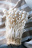 Fresh enoki mushrooms on a striped cloth
