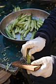 Asparagus being peeled, Italy