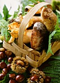 An autumnal arrangement of fresh porcini mushrooms and chestnuts