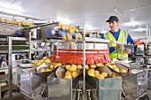A quality control worker checking potatoes at a sorting machine