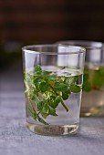 A glass of water with fresh mint