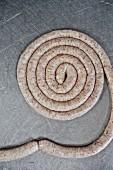 Fresh sausage spiral