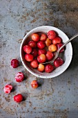 A bowl of frozen cherries on a rusty metal surface