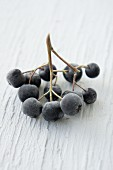 A sprig of frozen aronia berries