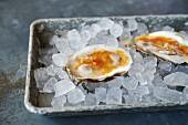 Rohe Austern auf Eis mit Mignonette Sauce
