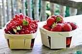 Rote Johannisbeeren und Erdbeeren in Spankörben auf Holztisch